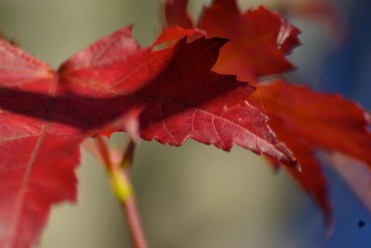 Last Leaves of Fall